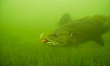 Video: SCUBA Diving Meets Bass Fishing