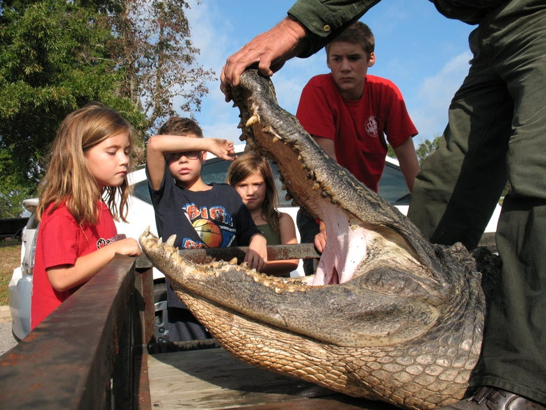 Catching a 13-Foot Alligator in South Carolina's Marion Lake