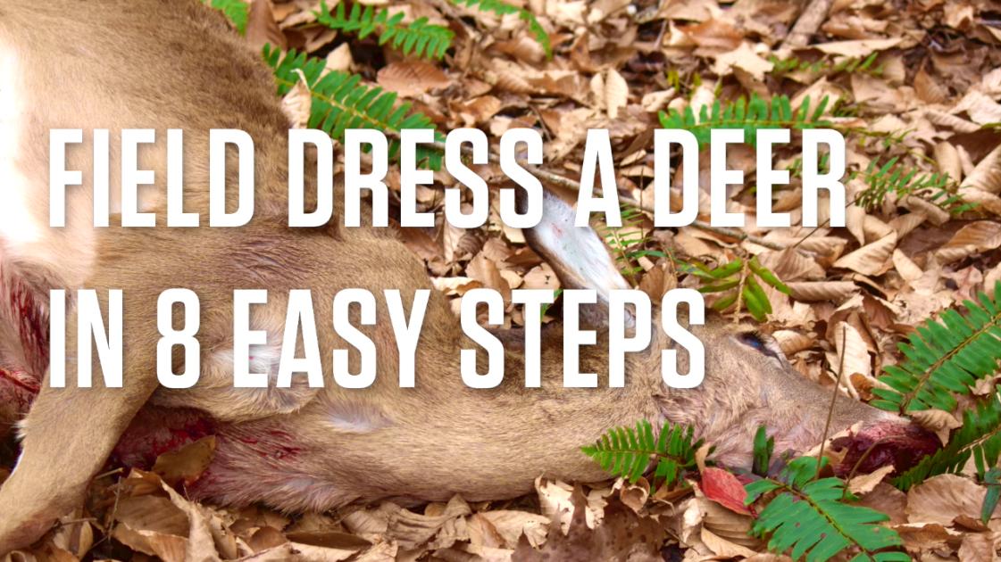 Field Dress a Deer in 8 Easy Steps