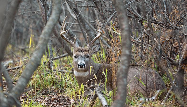 early-season bucks