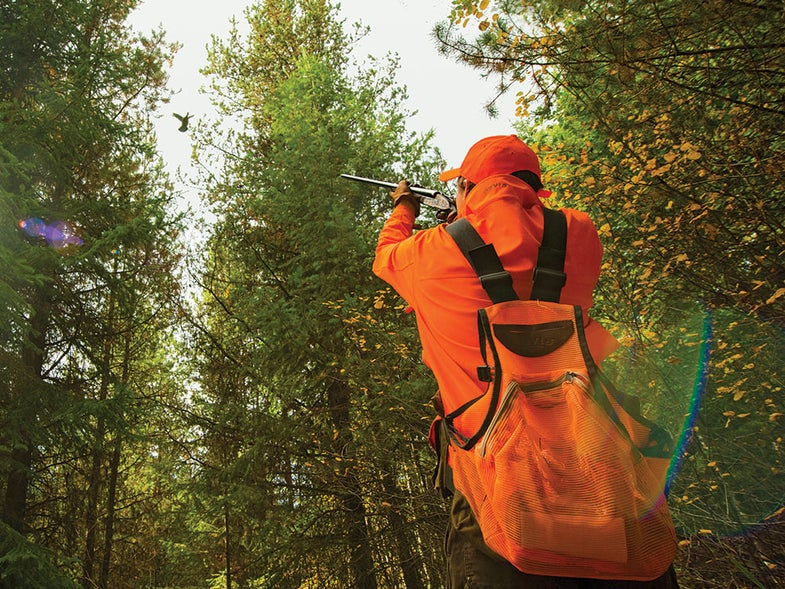 Hunter in orange shooting at a fleeing ruffed grouse
