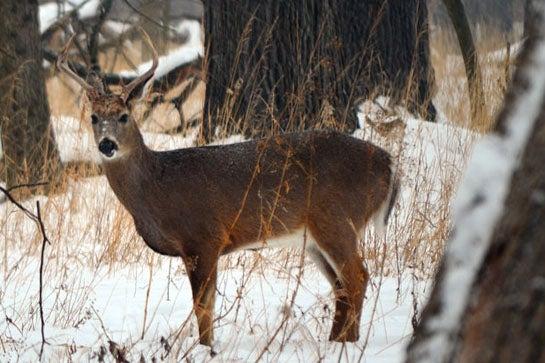 Deer Culling Programs Feed D.C.'s Homeless