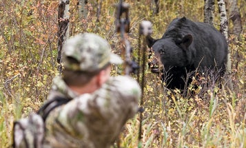 Two Strategies for Stalking Black Bears