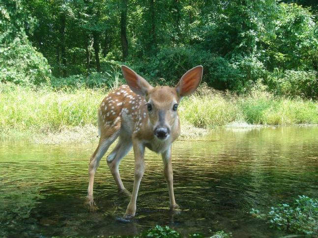 Trail Cam Photos: The 56 Best Wildlife Shots from Our 2012 Fall Contest (Round I)