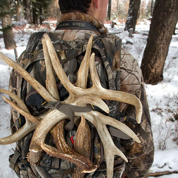 Shed Hunting: 5 Tips to Become a Better Bone Collector