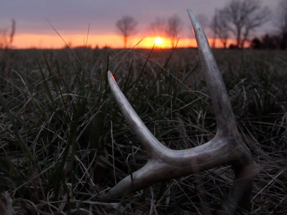 shed antler sunset