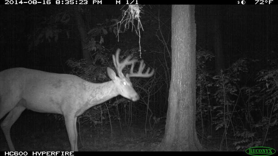 Identify New Food Sources Before the Bow Season Opener