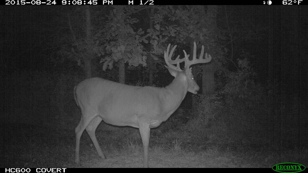 trail cam buck footage