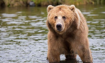 Bear Attack Myths Busted (and How to Stay Safe in Bruin Country)