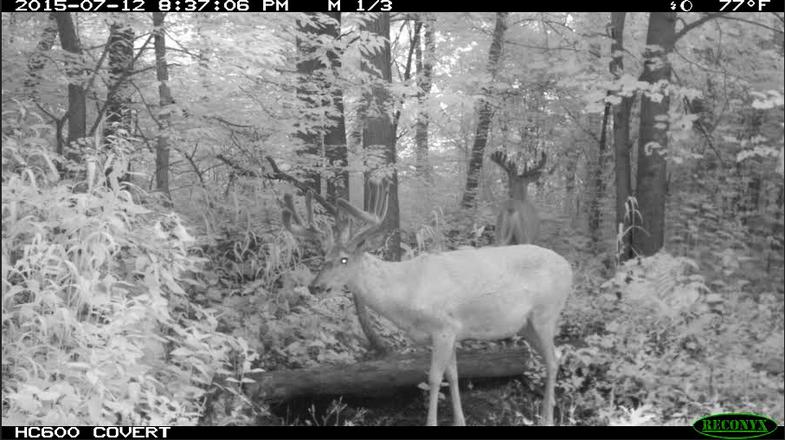 Deer, Deer Hunting, Trail-cam photo, scouting, whitetails, Rut Report, Scott Bestul