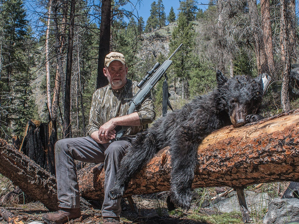 silver-backed black bear
