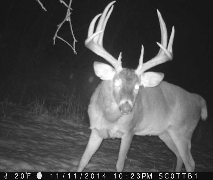 Rut Peak Is Past, Food Sources Are Hot Now