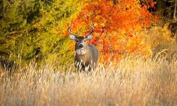 10 Ways to Beat the October Lull and Get Your Buck