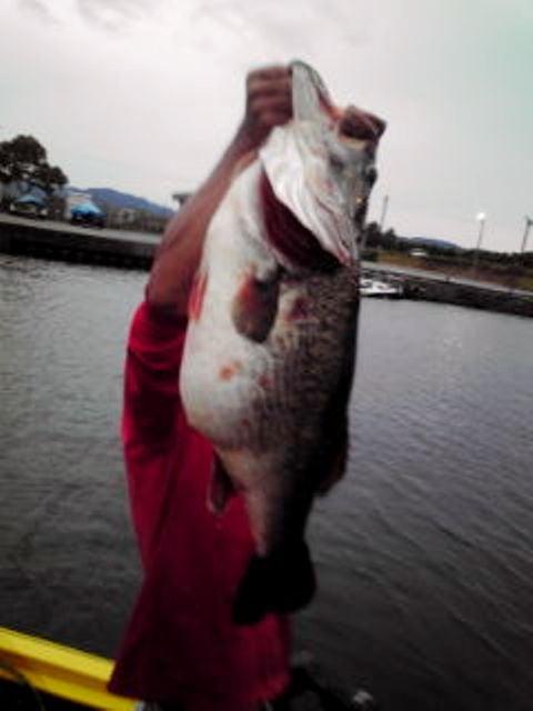 Record bass