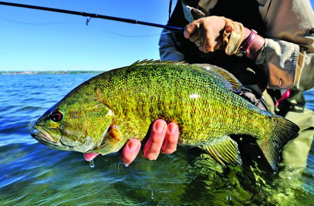 Giant summer smallmouth action.