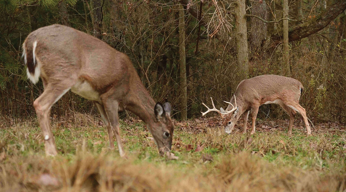 Food-Plot Rx: Keep Deer Happy, Fed, and On Your Land
