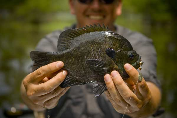 httpswww.fieldandstream.comsitesfieldandstream.comfilesimport2014bream_tight_0.jpg