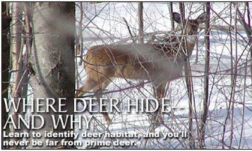 Where Deer Hide -And Why