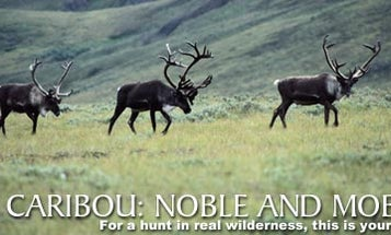 Caribou: Noble and Mobile