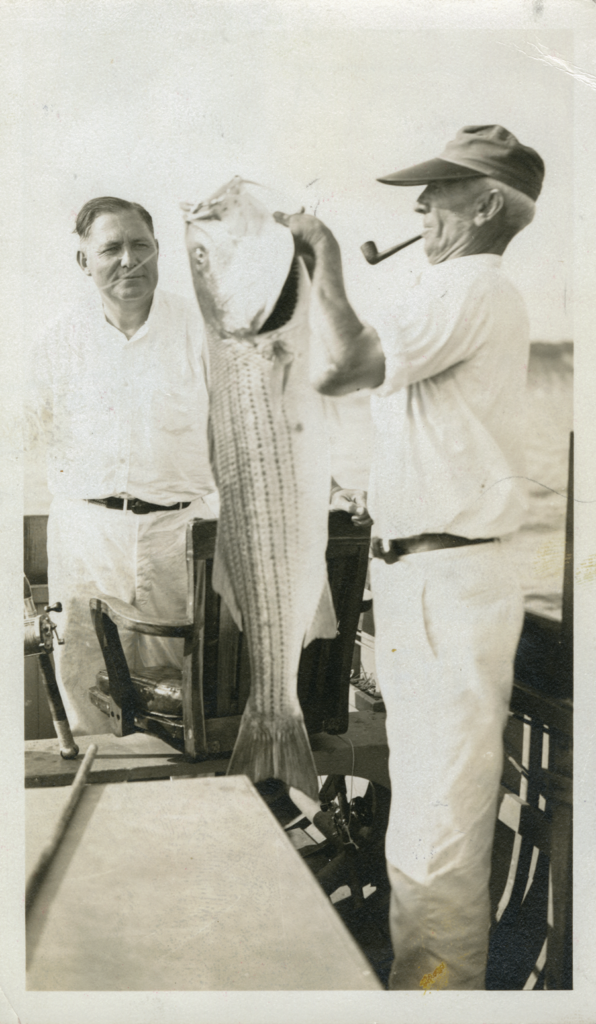 A black and white image of anglers holding up a large cow stripe bass.