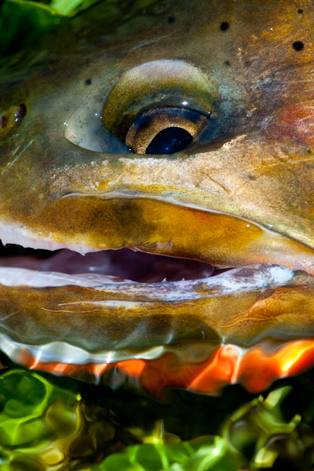 How to Fish For the Cutthroat Trout Slam