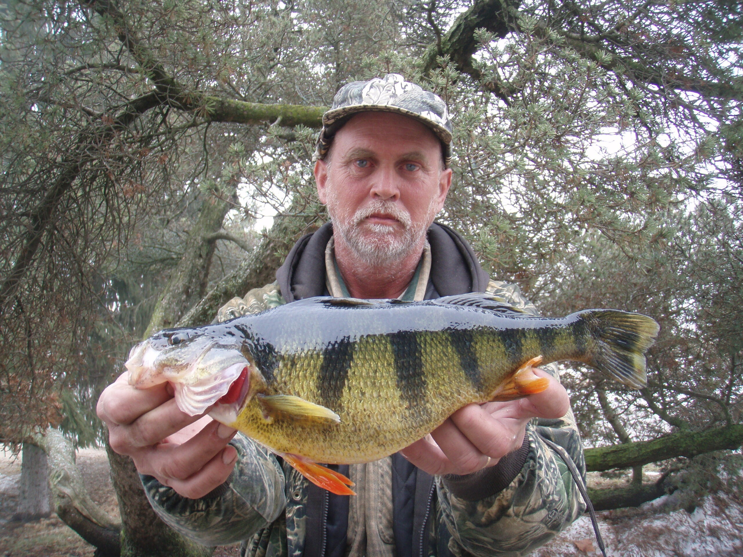 New State-Record Perch Comes Through the Ice in Iowa