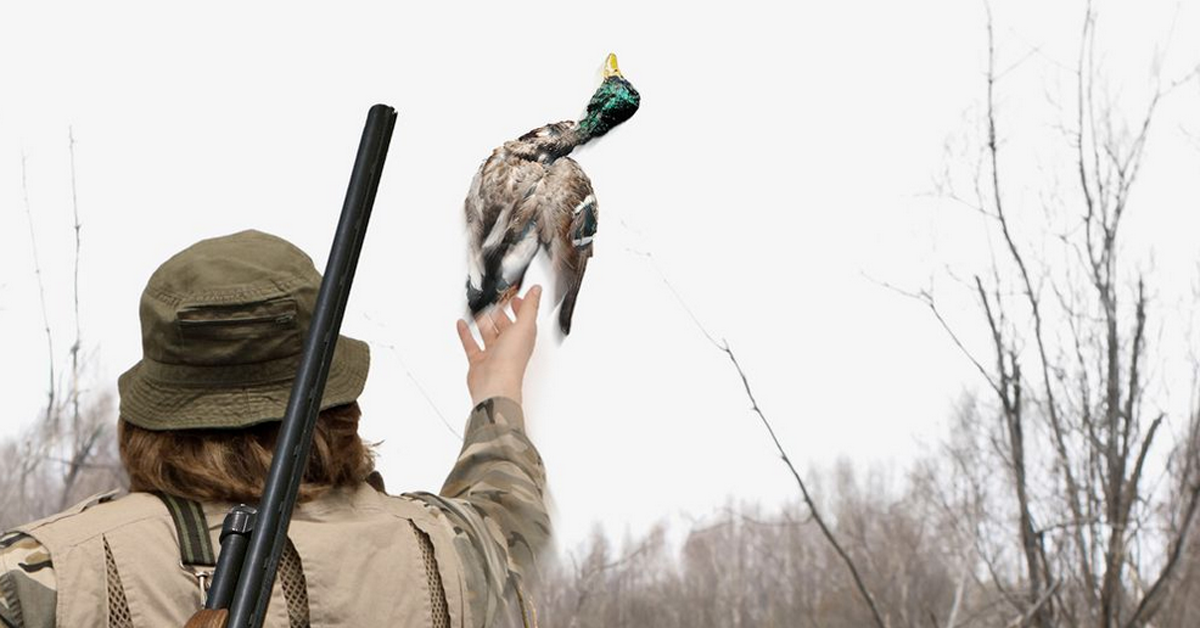 Ethical Hunter Throws Duck Back Into Sky