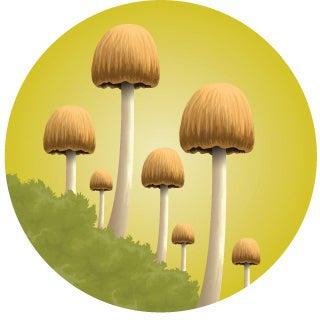 whitetail food alternative mushroom