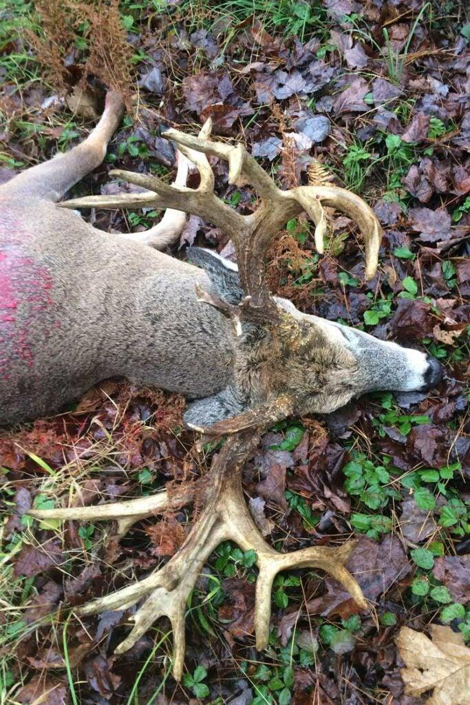 Pennsylvania buck