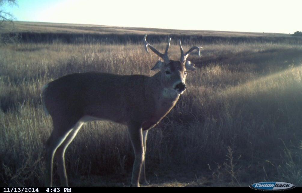 At or Near Peak Rut, Bucks Moving During Daylight