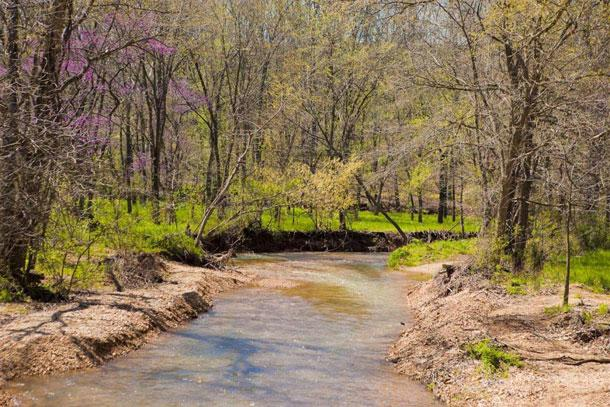 A shallow, sandy creek bed in the woods.