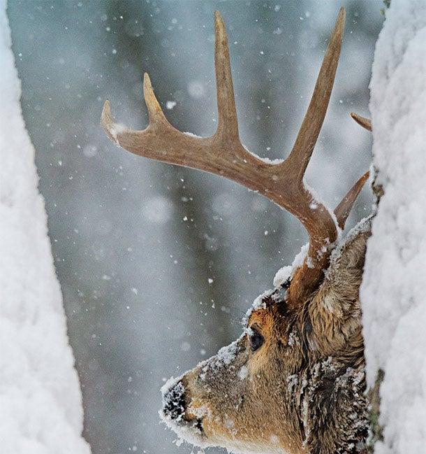Late-Season Deer Tip: Execute an Eye-Level Ambush