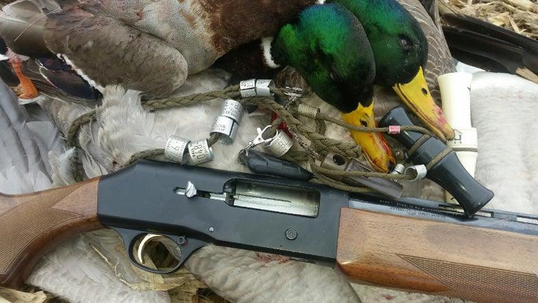 B80 and ducks