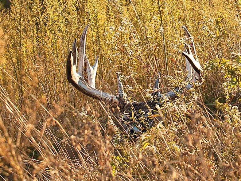 11 point buck creek crossing
