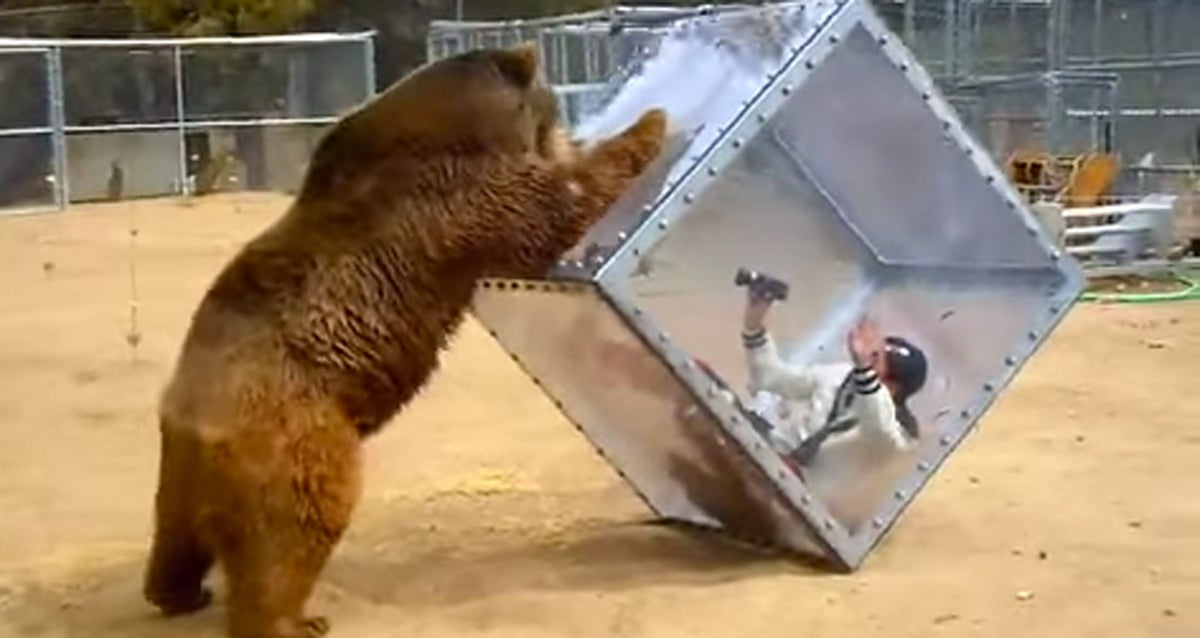Video: Bear Charges Woman in Clear Cube