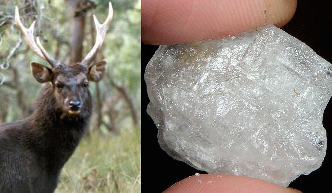 Australian Poachers Are Cutting Off Deer Heads to Pay for Drugs