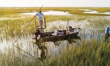 Hunting Marsh Rail Birds on North Carolina's Cape Fear River