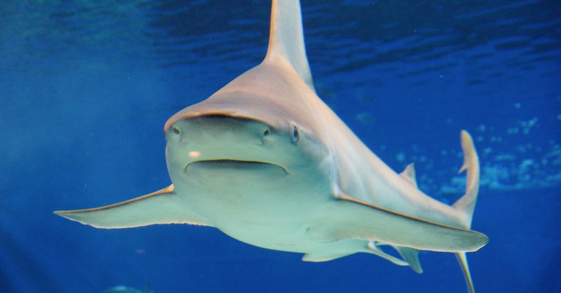 Above Average Number of Shark Attacks This Summer