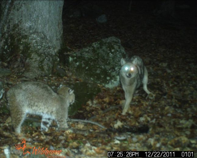 The 50 Best Photos From Round IV of the 2011 Field & Stream Fall Trail Cam Contest