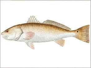 VENICE: Delta Force Fishing