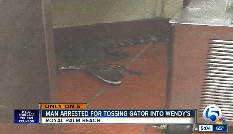 Florida Man Tosses Alligator Through Drive-Thru Window, Faces Criminal Charges