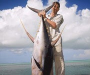 Record Breaking Yellowfin Tuna Caught on the Fly?