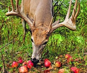 Plant These Fruit Trees to Put Bucks in Bow Range