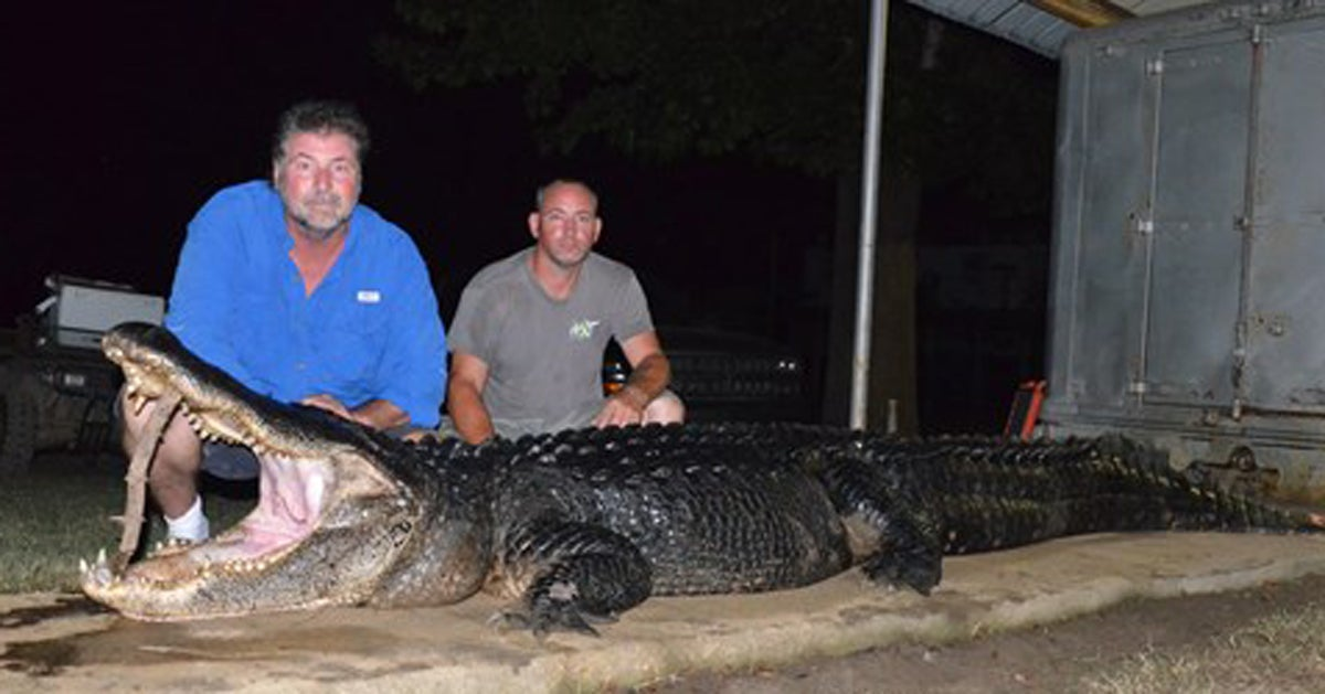 Three Mississippi Alligator Records Broken in 24 Hours