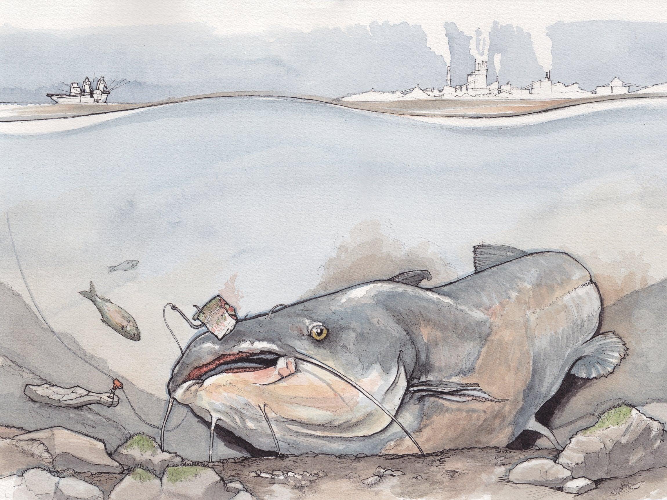 winter catfish