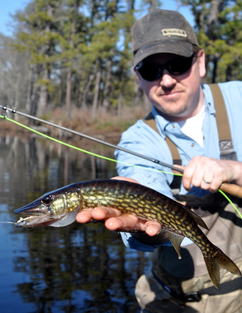 Fly Fishing for Ice-Out Pickerel in the New Jersey Pine Barrens
