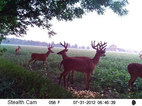 httpswww.fieldandstream.comsitesfieldandstream.comfilesimport2014importImage2012photo23OhioBuck_04.jpg