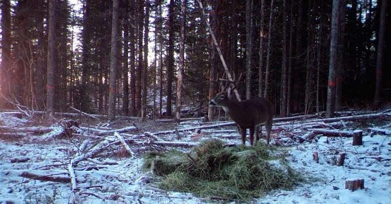 Rut Winding Down in Northern Idaho and Washington