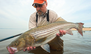 How to Catch Monster Stripers