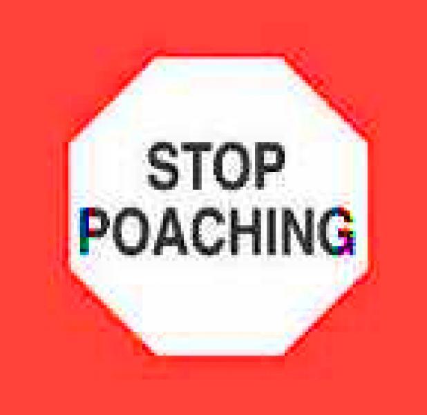httpswww.fieldandstream.comsitesfieldandstream.comfilesimport2014importBlogPostembedstop-poaching.jpg